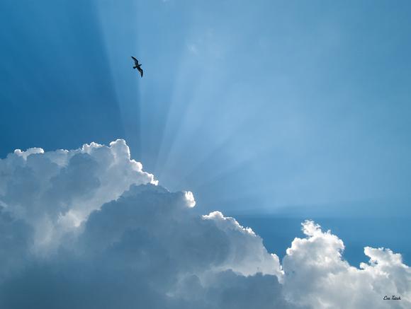 Heavenly - Finalist, Birds as Art International Competition